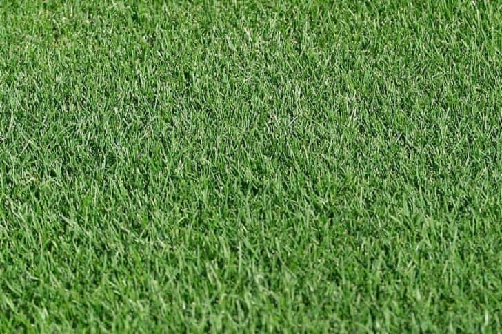 How to Choose the Right Lawn Grasses