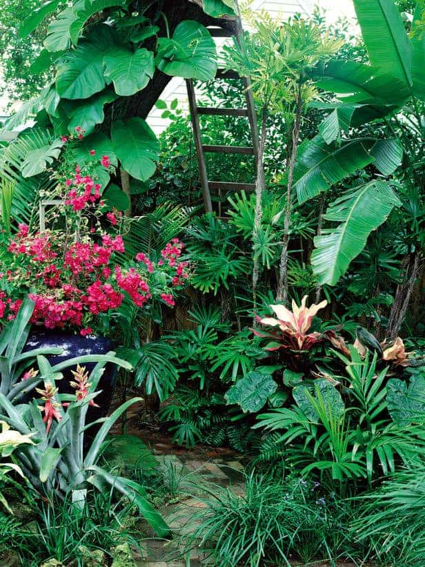 How to Make a Tropical Garden Design - flowers-plants-planters