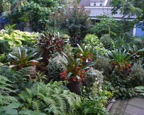 how to design a tropical garden. How to Make a Tropical Garden Design  flowers plants planters 1001 Gardens