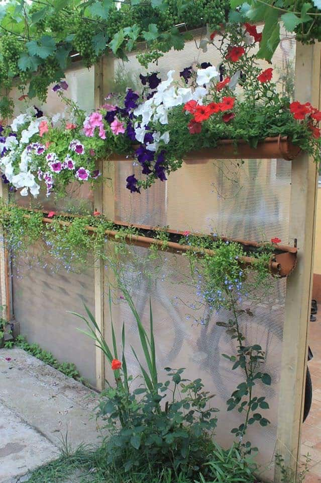My Hanging Garden - flowers-plants-planters