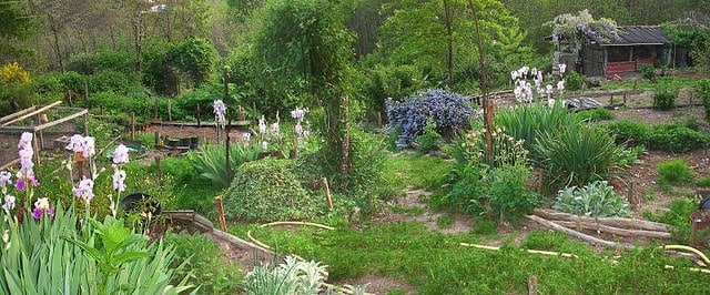 A Guide to Permaculture for the Beginners 1 - Flowers & Plants - 1001 Gardens