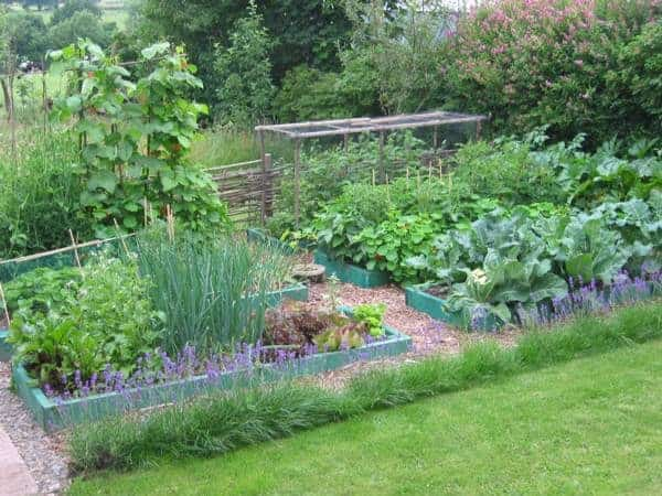 A Guide to Permaculture for the Beginners Flowers, Plants & Planters