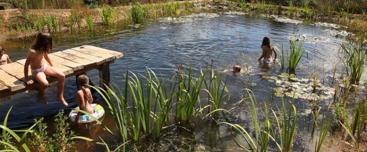How to Build an Organic Natural Pool 1 - Garden Decor