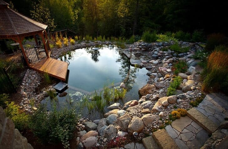 How to Build an Organic Natural Pool - garden-decor