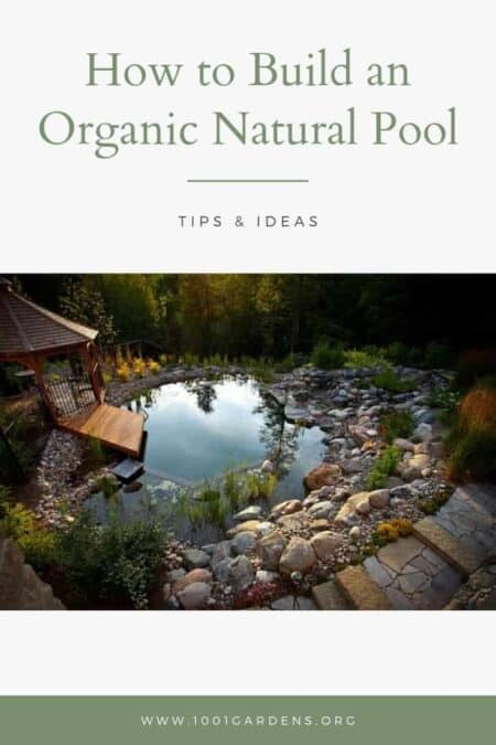 How to Build an Organic Natural Pool
