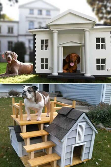 How to Choose the Best Outdoor Dog Kennel