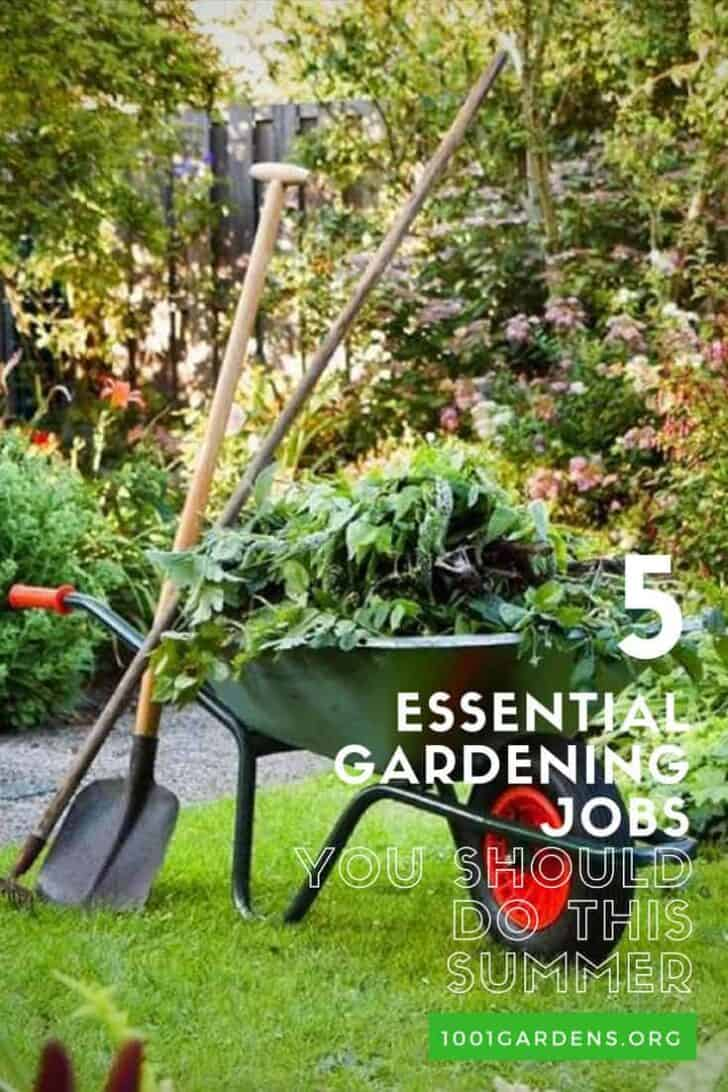 Five Essential Gardening Jobs You Should Do This Summer 21 - Garden Decor