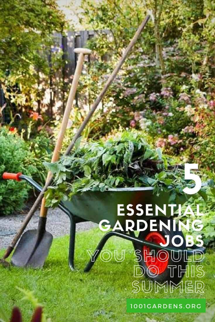 Five Essential Gardening Jobs You Should Do This Summer
