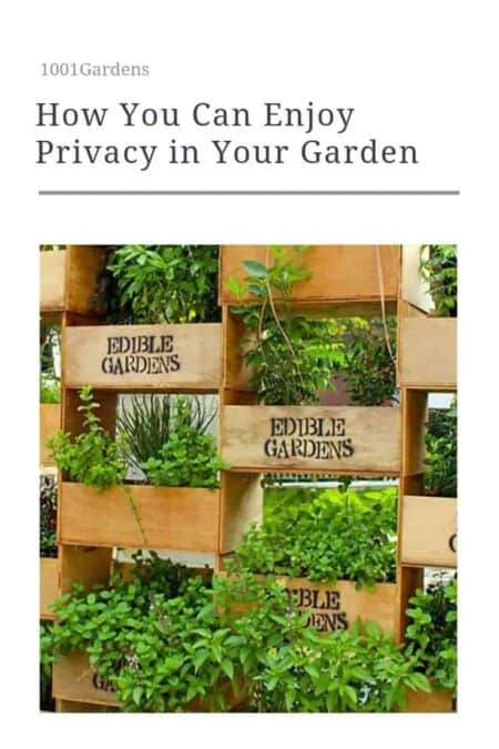 How You Can Enjoy Privacy in Your Garden