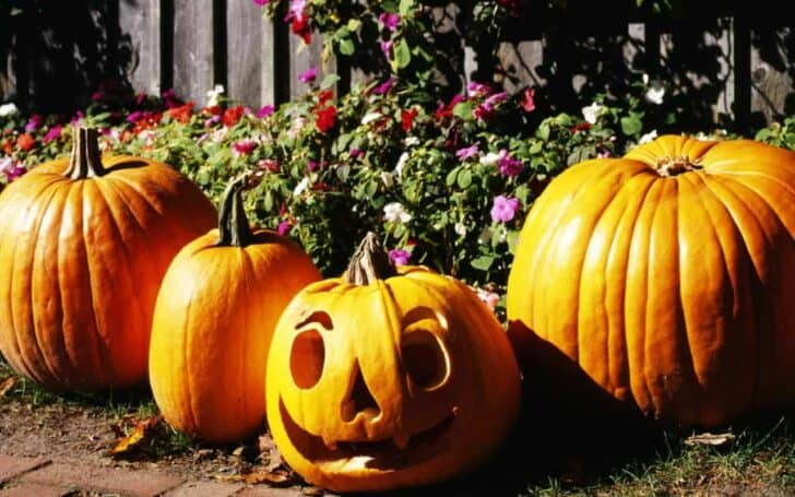 27 Best Outdoor Halloween Decorations 53 - Garden Decor