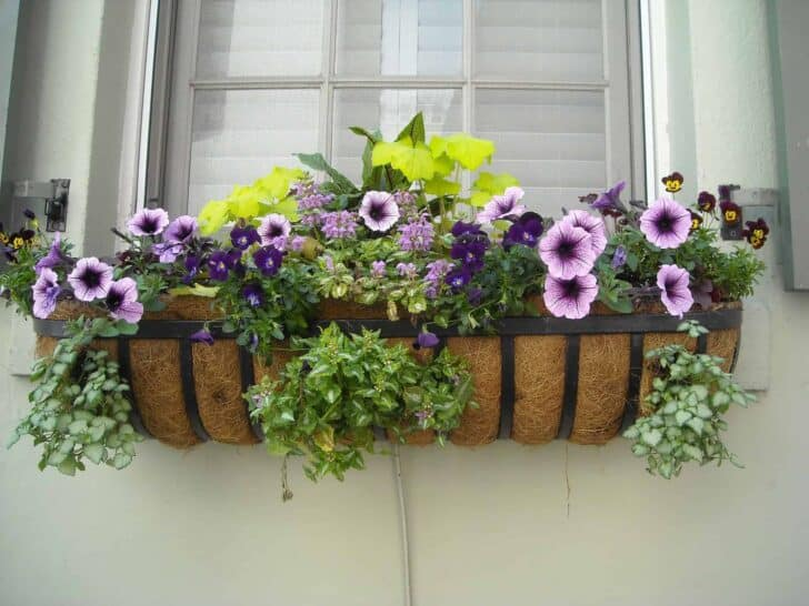 Gardening Without A Garden: 10 Ideas For Your Patio Or Balcony 1 - Urban Gardens & Agriculture