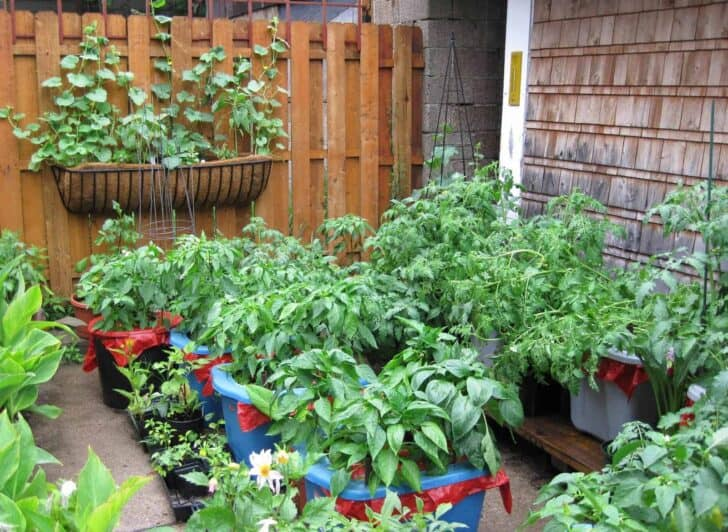 Gardening Without A Garden: 10 Ideas For Your Patio Or Balcony 3 - Urban Gardens & Agriculture