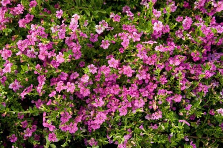 The Top Flowers For Your Warm-Weather Garden 3 - Flowers & Plants