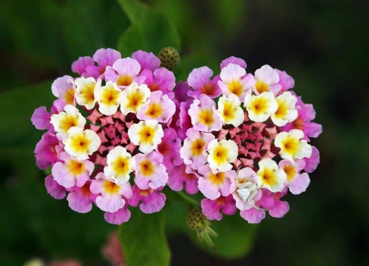 The Top Flowers For Your Warm-Weather Garden 5 - Flowers & Plants