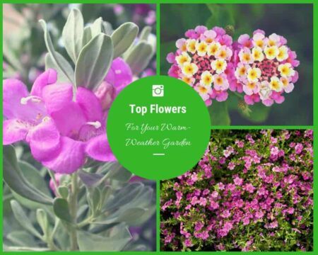 The Top Flowers For Your Warm-Weather Garden 2 - Flowers & Plants - 1001 Gardens