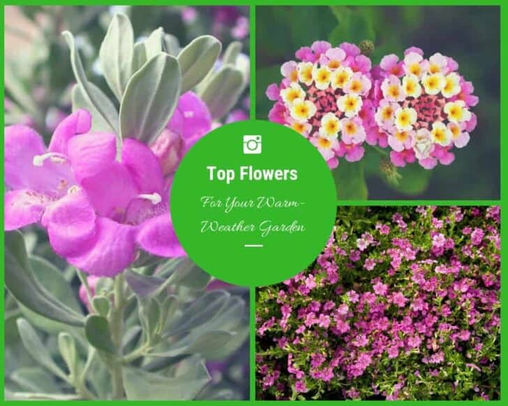 The Top Flowers For Your Warm-Weather Garden 11 - Flowers & Plants