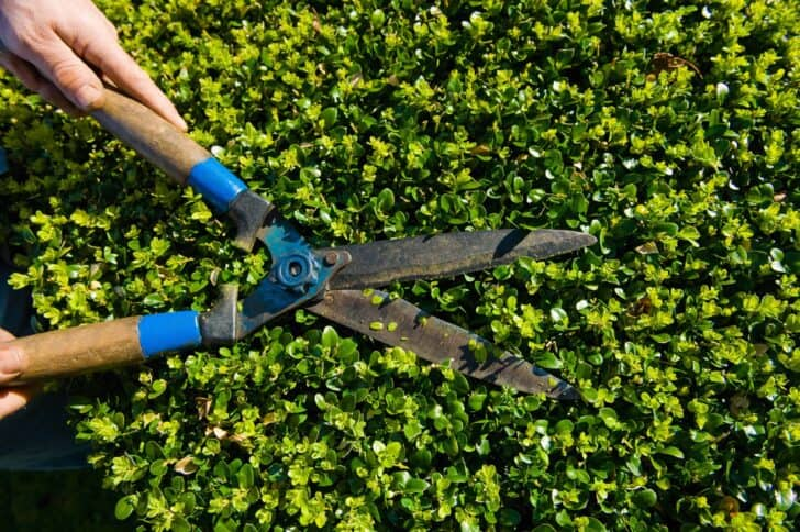 20 Must-Have Gardening Tools Every Gardener Needs: The Complete list 11 - Garden Tools - 1001 Gardens