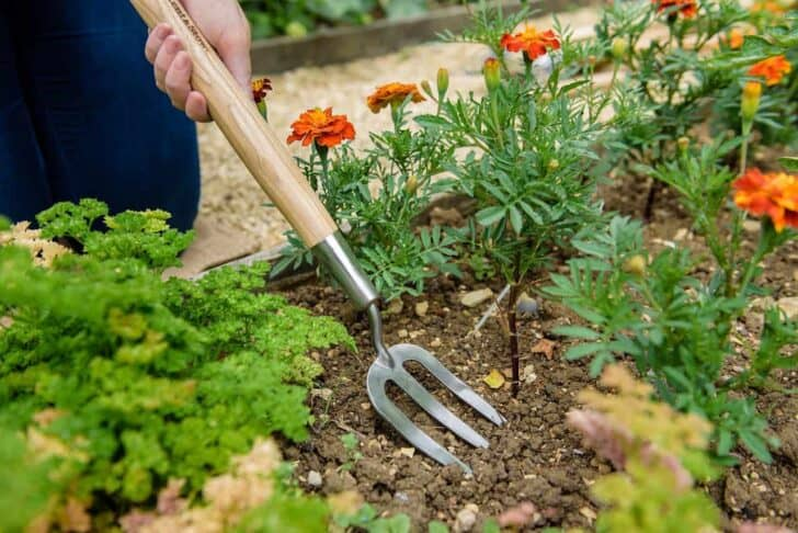 20 Must-Have Gardening Tools Every Gardener Needs: The Complete list 14 - Garden Tools - 1001 Gardens