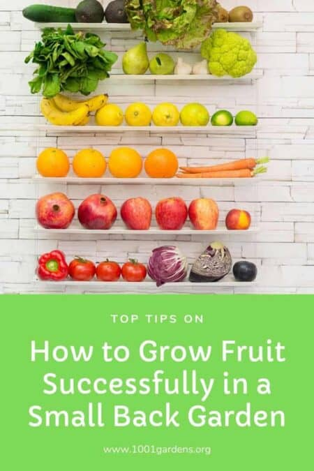 Top Tips on How to Grow Fruit Successfully in a Small Back Garden 1 - Urban Gardens & Agriculture - 1001 Gardens