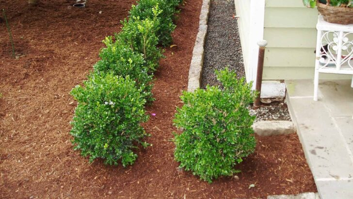 How Proper Landscaping Can Prevent Basement Flooding? 19 - Landscape & Backyard Ideas