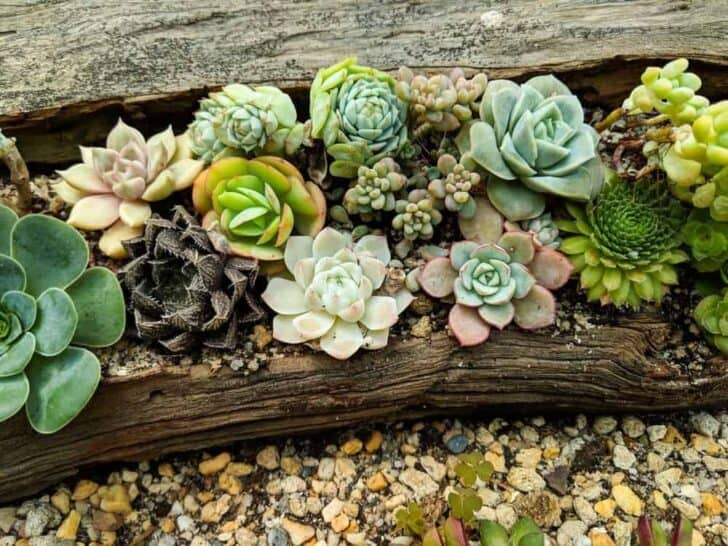 DIY front yard landscaping ideas on a budget 3 - Landscape & Backyard Ideas - 1001 Gardens