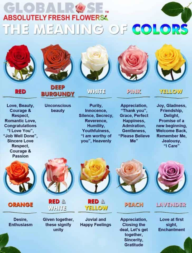 Which flowers to offer for which occasion? 1 - Flowers & Plants - 1001 Gardens