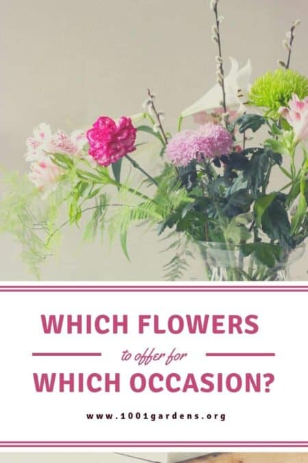 Which flowers to offer for which occasion? 8 - Flowers & Plants - 1001 Gardens