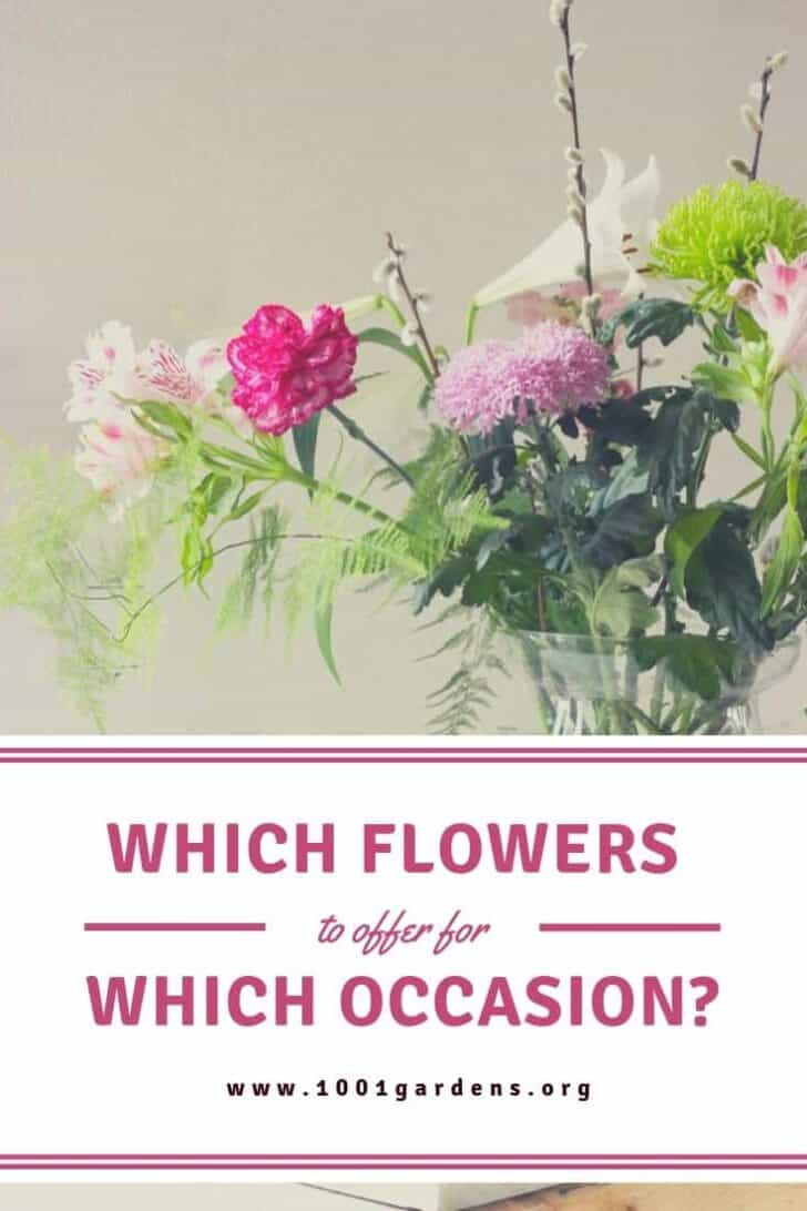 Which flowers to offer for which occasion? 1 - Flowers & Plants
