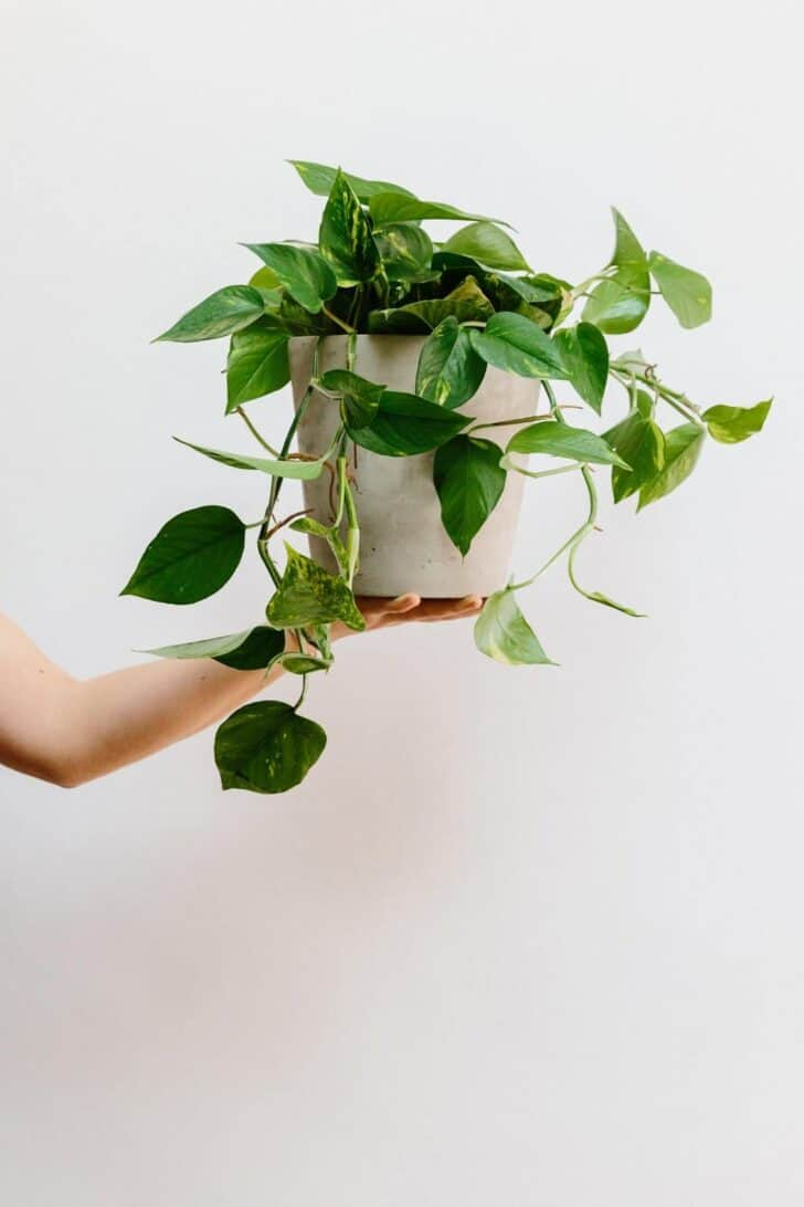 15 Plants for your Indoor Garden and how to take care of them 62 - Flowers & Plants