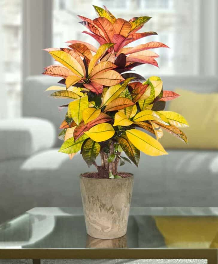 15 Plants for your Indoor Garden and how to take care of them 71 - Flowers & Plants
