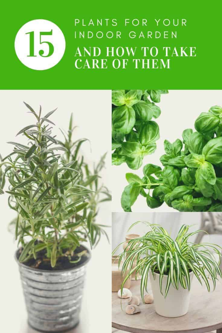 15 Plants For Your Indoor Garden And How To Take Care Of