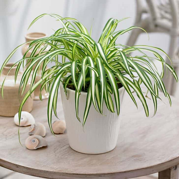 15 Plants for your Indoor Garden and how to take care of them 56 - Flowers & Plants