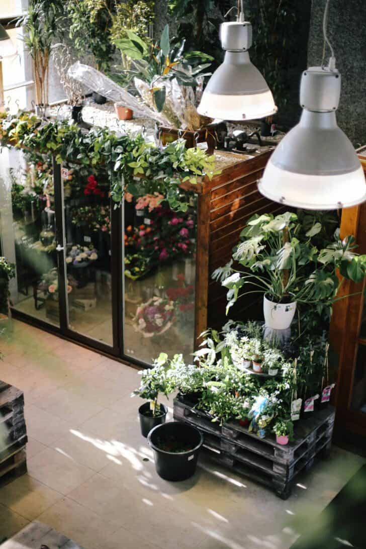 15 Plants for your Indoor Garden and how to take care of them 39 - Flowers & Plants