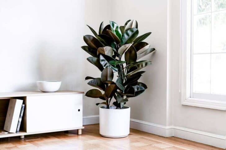 15 Plants for your Indoor Garden and how to take care of them 58 - Flowers & Plants