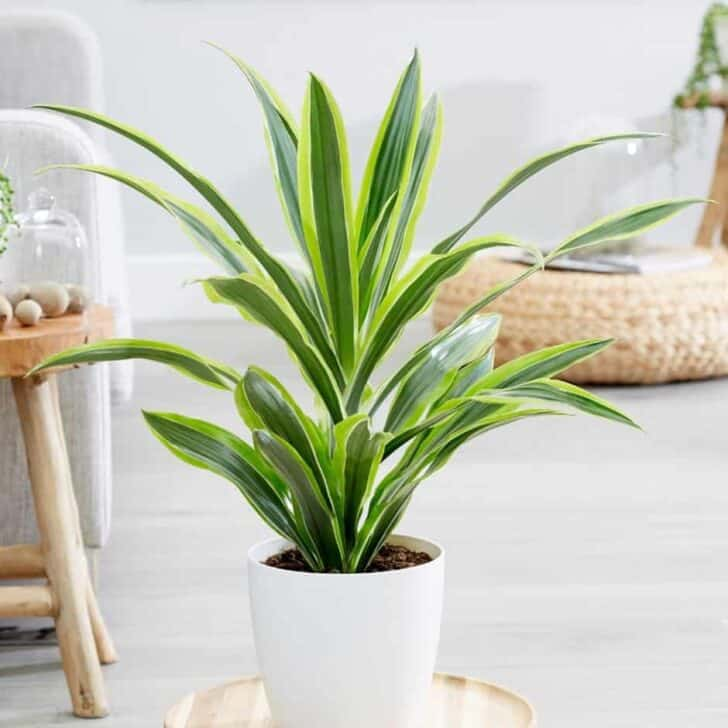 15 Plants for your Indoor Garden and how to take care of them 60 - Flowers & Plants