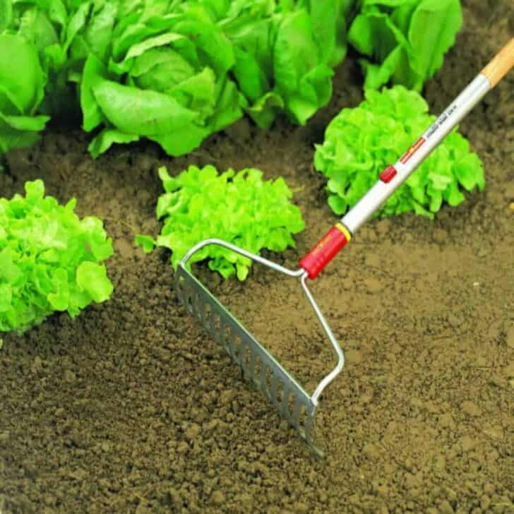 5 Essential Gardening Tools and What They Do 9 - Garden Tools - 1001 Gardens
