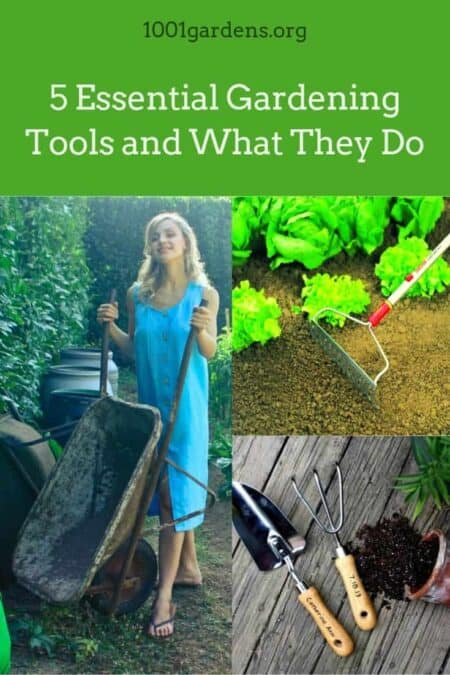5 Essential Gardening Tools and What They Do 5 - Garden Tools - 1001 Gardens
