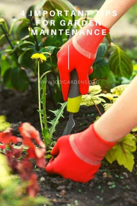 4 Important Tips For Garden Maintenance 11 - Flowers & Plants