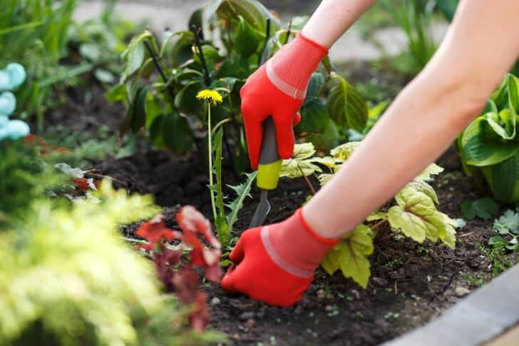 4 Important Tips For Garden Maintenance 4 - Flowers & Plants - 1001 Gardens