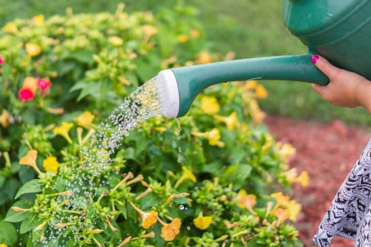 4 Important Tips For Garden Maintenance 2 - Flowers & Plants - 1001 Gardens