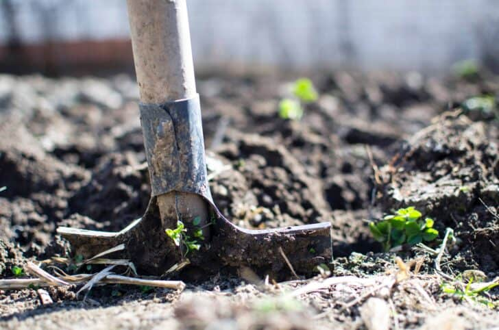 10 Must-have tools for your garden 5 - Garden Tools