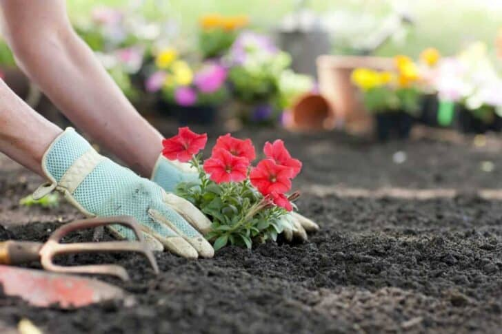 10 Must-have tools for your garden 37 - Garden Tools