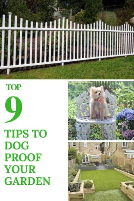9 Tips To Dog Proof Your Garden 7 - Garden Decor