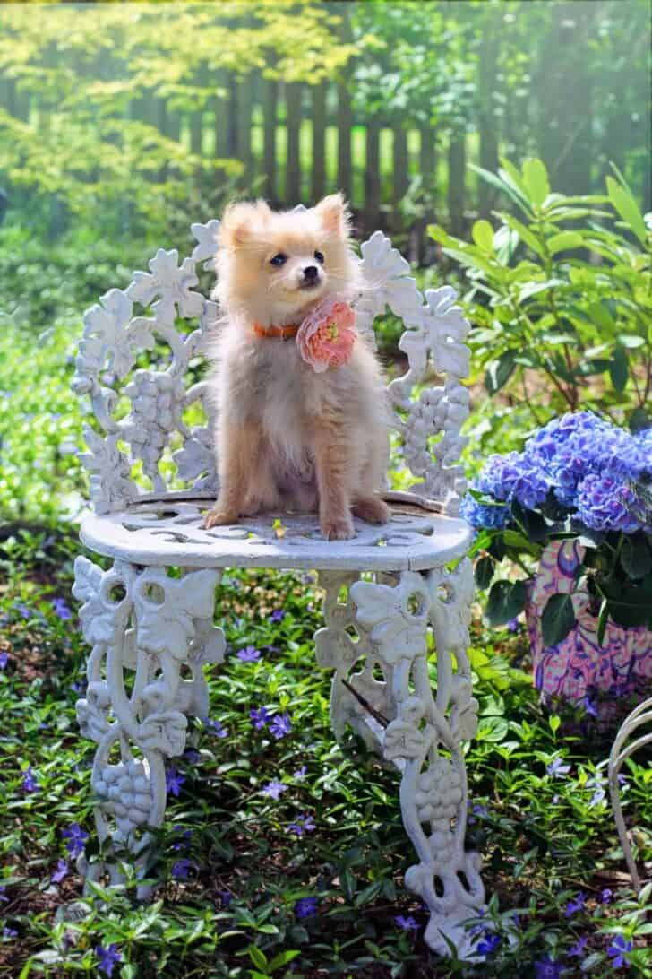 9 Tips To Dog Proof Your Garden 1 - Garden Decor - 1001 Gardens