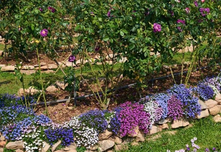 Flower garden ideas for small yards 103 - Flowers & Plants
