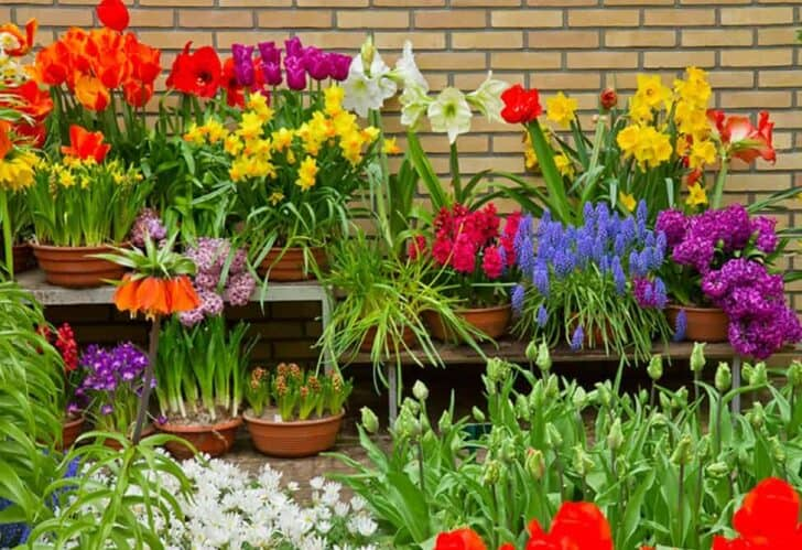Flower garden ideas for small yards 77 - Flowers & Plants