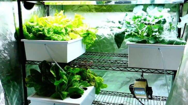 The Grow Tent Set-Up and Why You Should Use a Fan 4 - Urban Gardens & Agriculture - 1001 Gardens