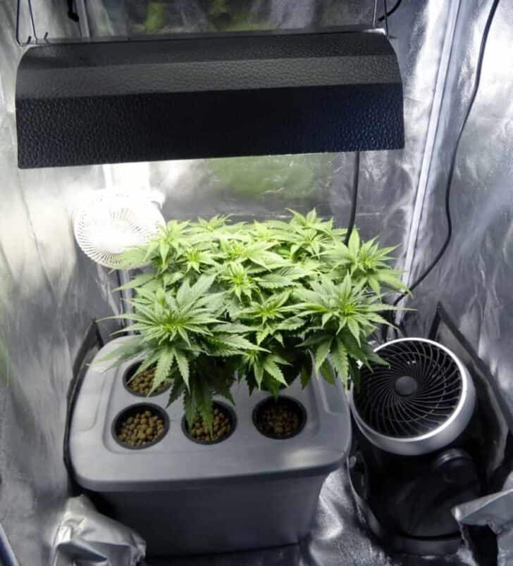 The Grow Tent Set-Up and Why You Should Use a Fan 7 - Urban Gardens & Agriculture - 1001 Gardens