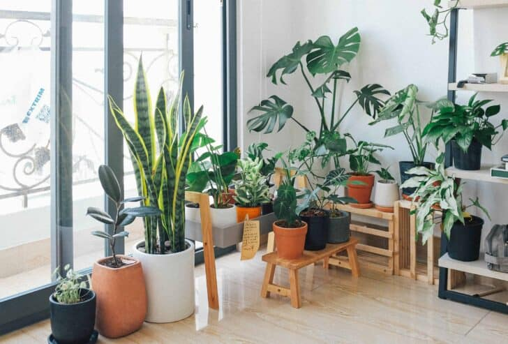 Best Urban Jungle Interior Style Ideas 19 - Garden Decor