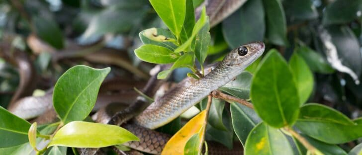 Snake Removal 101: How To Keep Snakes Out Of Your Garden 19 - Flowers & Plants